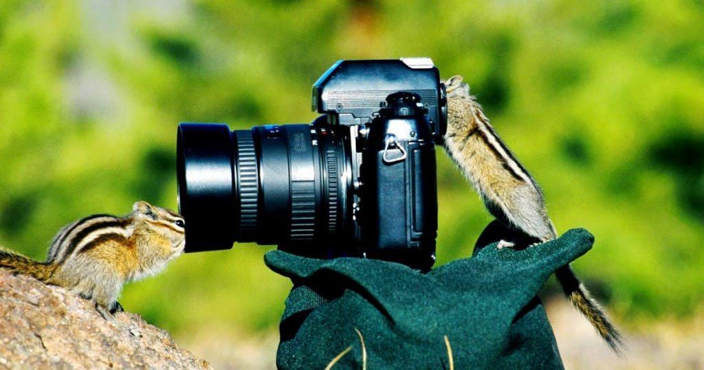 cámaras